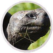 Galapagos Tortoise Galapagos Islands National Park Santa Cruz Island Round Beach Towel