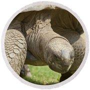 Galapagos Turtle Round Beach Towel