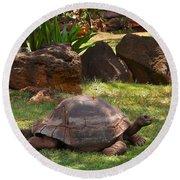 Galapagos Turtle At Honolulu Zoo Round Beach Towel