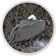 Galapagos - Watchful Pelican Round Beach Towel