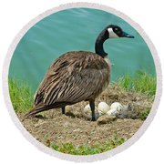 Gander Protecting The Nest Round Beach Towel