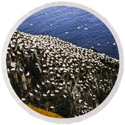 Gannets At Cape St. Mary's Ecological Bird Sanctuary Round Beach Towel