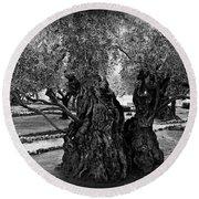 Garden Of Gethsemane Olive Tree Round Beach Towel
