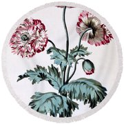Garden Poppy With Black Seeds Round Beach Towel