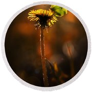 Garden Stories II Round Beach Towel