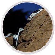 Garter Snake Genus Elapsoidea Round Beach Towel