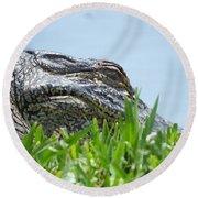 Gator Watching Round Beach Towel