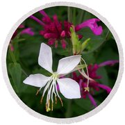 Gaura Lindheimeri Whirling Butterflies With Agastache Ava Round Beach Towel