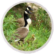 Geese And Gosling Round Beach Towel