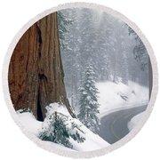 2m6836-generals Highway In The Giant Sequoias Round Beach Towel
