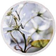 Gentle White Spring Flowers Round Beach Towel