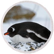 Gentoo Penguin On Nest Round Beach Towel