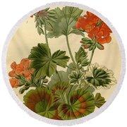 Geraniums Round Beach Towel by Philip Ralley