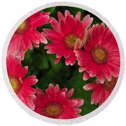 Gerber Daisies Cluster Round Beach Towel