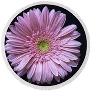 Gerber Daisy Flower Round Beach Towel