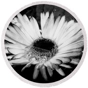 Gerbera In Black And White Round Beach Towel