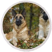 German Shepherd Dogs Round Beach Towel