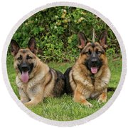 German Shepherds - Mother And Son Round Beach Towel