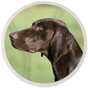 German Short-haired Pointer Dog Round Beach Towel