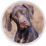 German Short-haired Pointer Puppy Round Beach Towel