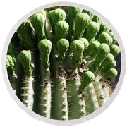 Getting Ready To Bloom Round Beach Towel