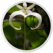 Ghost Orchid 2 Round Beach Towel