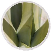 Giant Agave Abstract 7 Round Beach Towel