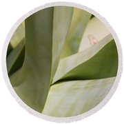 Giant Agave Abstract 8 Round Beach Towel