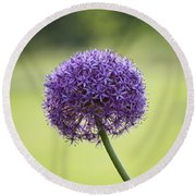 Giant Allium Flower Round Beach Towel
