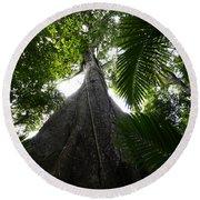 Giant Cashew Tree Amazon Rainforest Brazil Round Beach Towel