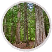 Giant Cedars On Trail Of The Cedars In Glacier Np-mt Round Beach Towel