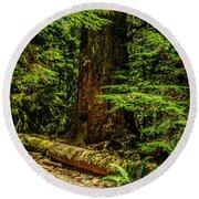 Giant Douglas Fir Trees Collection 3 Round Beach Towel