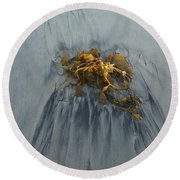 Giant Kelp On The Beach Round Beach Towel