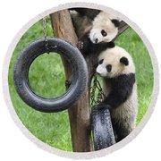 Giant Panda Cubs Round Beach Towel