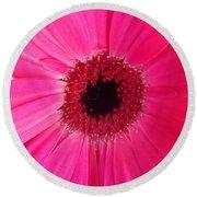 Flower Photography - Giant Pink Gerbera Daisy Round Beach Towel
