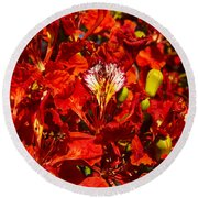 Giant Poinciana Blooms Round Beach Towel