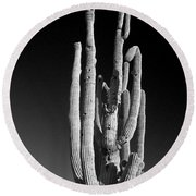 Giant Saguaro Cactus Portrait In Black And White Round Beach Towel