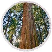 Giant Sequoia Trees Of Tuolumne Grove In Yosemite National Park. Round Beach Towel