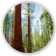 Giant Sequoias In Mariposa Grove In Yosemite National Park-california Round Beach Towel