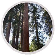 Giant Sequoias - Yosemite Park Round Beach Towel