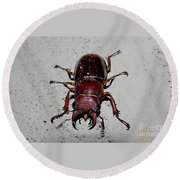 Giant Stag Beetle Round Beach Towel