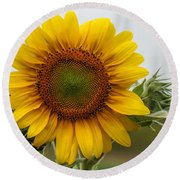 Giant Sunflower Round Beach Towel