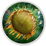 Giant Sunflower Drama Round Beach Towel