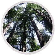 Giants Of The Forest Round Beach Towel