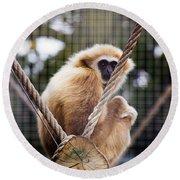 Gibbon On A Swing Round Beach Towel