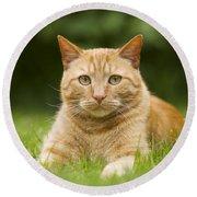 Ginger Cat In Garden Round Beach Towel