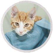 Ginger Kitten In A Basket Round Beach Towel