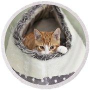 Ginger Kitten In An Igloo Round Beach Towel