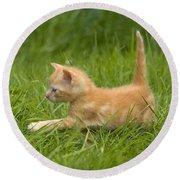Ginger Tabby Kitten Round Beach Towel