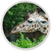 Giraffe-09028 Round Beach Towel